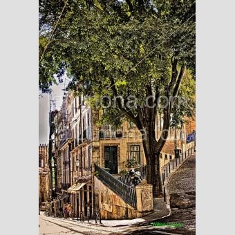 Árbol ciudad F00385 Wifred Llimona · Fotografías artísticas