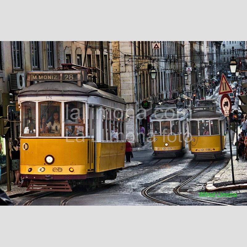 Tranvías de Lisboa F00387 Wifred Llimona - Fotografías artísticas