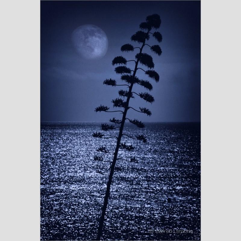 Silueta nocturna F00538 Wifred Llimona · Fotografías artísticas