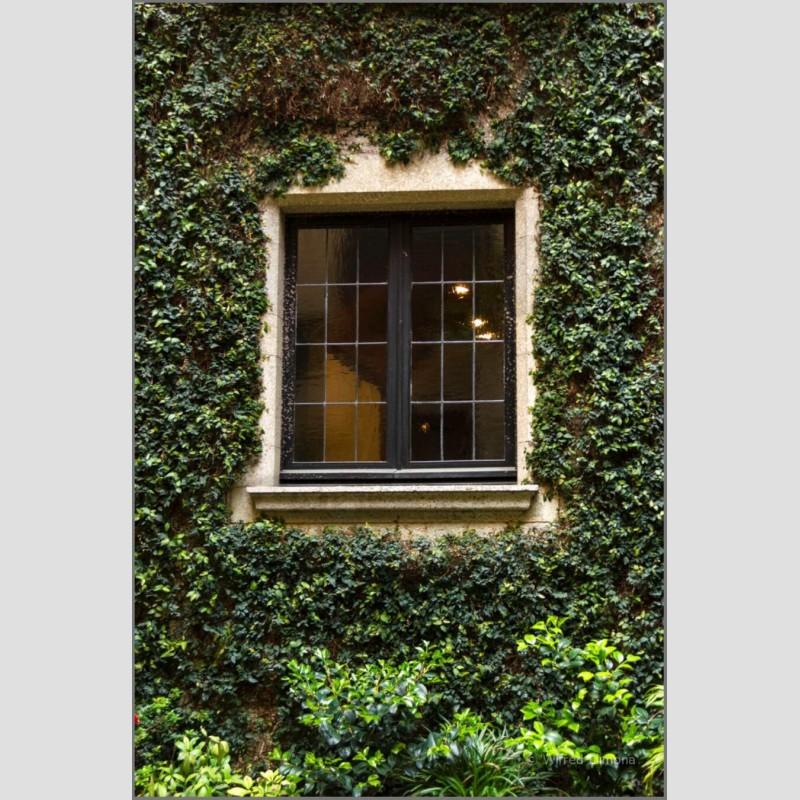 Ventana plantas enredaderas F00499 Wifred Llimona · Fotografías artísticas