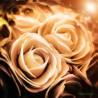 Mundo rosas F00119 Wifred Llimona · Fotografías artísticas