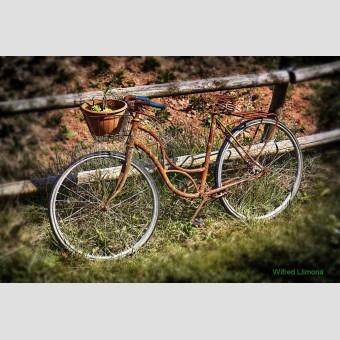 Bicicleta con cesta F00188-2 Wifred Llimona · Fotografías artísticas