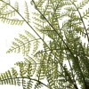 Plantas artificiales. Planta artificial boston fern bush