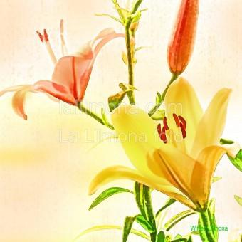 Flores amarillas F00310 Wifred Llimona · Fotos artísticas flora