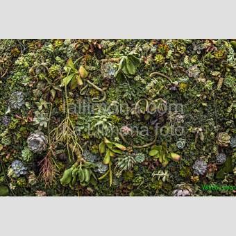 Jardín vertical F00318 Wifred Llimona · Fotografías artísticas flora · La Llimona foto