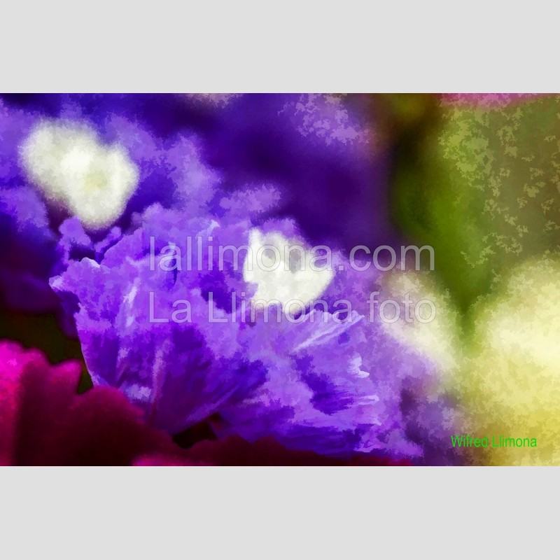 Flores F00336 Wifred Llimona · Fotografías artísticas