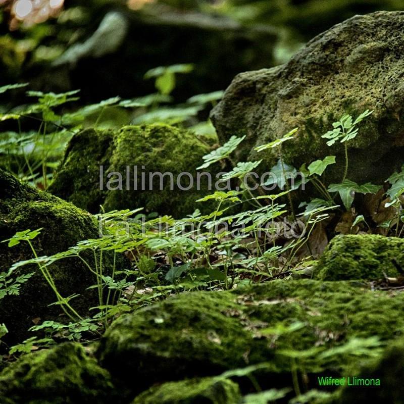 Fotografía plantas silvestres F00340 Wifred Llimona · Fotografías artísticas flora · La Llimona foto
