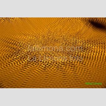 Ondas vibrantes F00348 · Autor: Wifred Llimona · Fotografías artísticas detalles · La Llimona foto