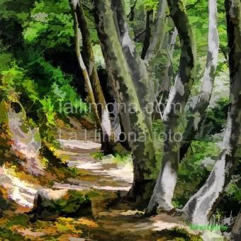 Camino F00356-2 · Autor: Wifred Llimona · Fotografías artísticas paisajes naturales · La Llimona foto