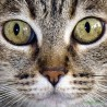 Ojos gato F00044 Wifred Llimona · Fotos artísticas fauna