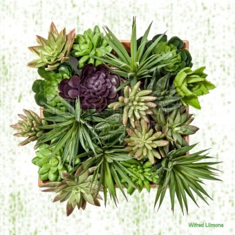 Arreglo plantas crasas F00054-2 · Autor: Wifred Llimona · Fotografías artísticas flora · La Llimona foto