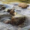 Corriente río F00062 Wifred Llimona · Fotos artísticas paisajes naturales