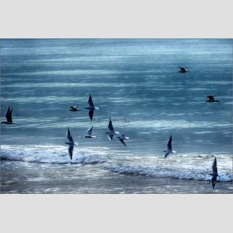 Pájaros revoloteando el mar F00570 · Autor: Wifred Llimona · Fotografías artísticas fauna · La Llimona foto