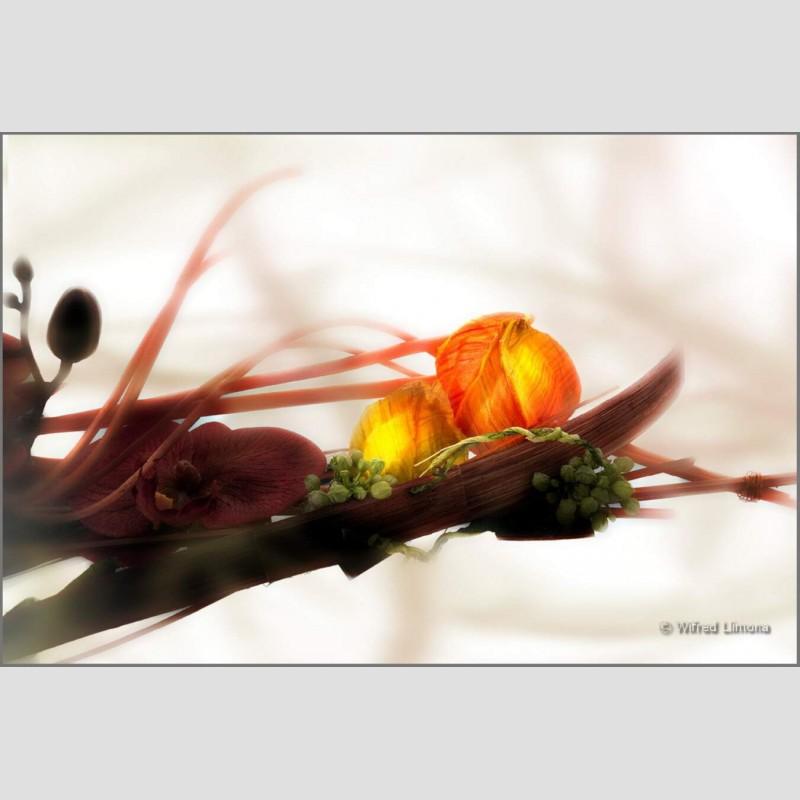 Arreglo floral F00609 Wifred Llimona · Fotos artísticas flora