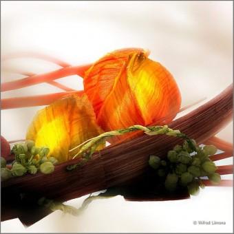 Arreglo floral F00609-2 Wifred Llimona · Fotos artísticas flora