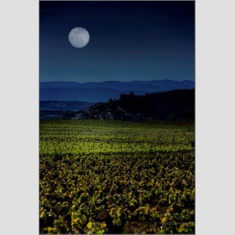 Paisaje con viñas F00504 Wifred Llimona · Fotografías artísticas