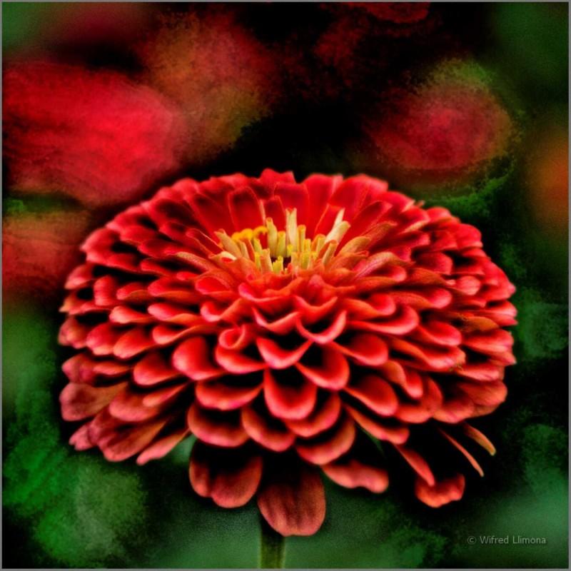 Flor F00471 Wifred Llimona · Fotos artísticas flora
