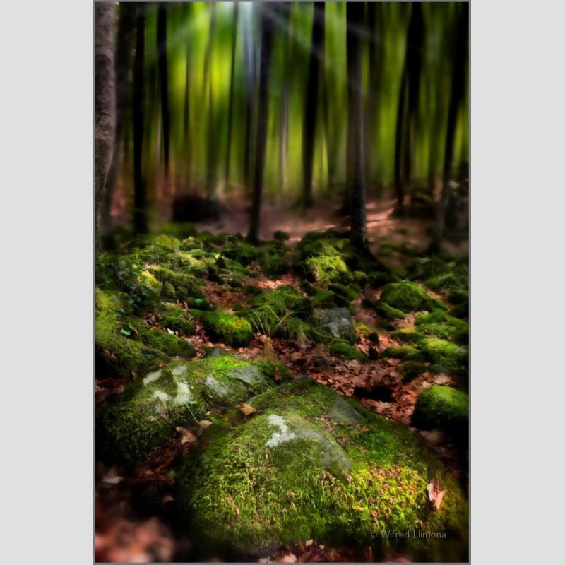 Bosque F00463 Wifred Llimona · Fotos artísticas paisajes naturales