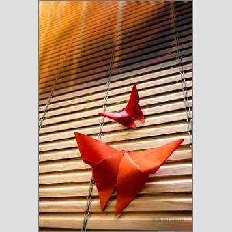Pajartitas papel F00445 · Autor: Wifred Llimona · Fotografías artísticas detalles · La Llimona foto