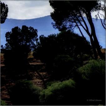 Siluetas árboles F00663-2 Wifred LLimona · Fotos artísticas paisajes naturales