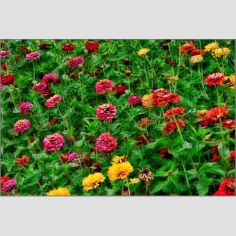 Tapiz flores F00437 Wifred Llimona · Fotos artísticas flora