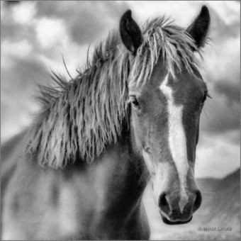 Caballo F00669-2 Wifred Llimona · Fotos artísticas fauna