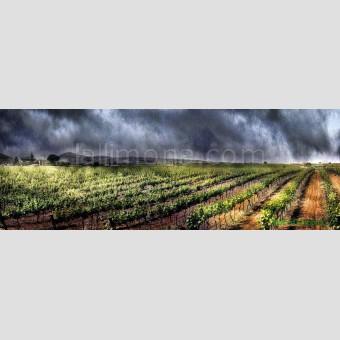 Viñas F00139-2 Wifred Llimona · Fotos artísticas paisajes naturales
