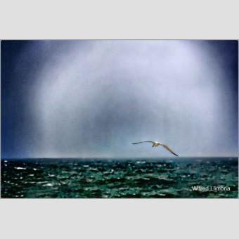 Gaviota sobre el mar F00706 Wifred Llimona · Fotos artísticas fauna