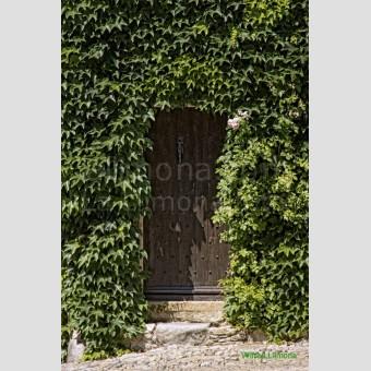 Puerta madera enredadera F00165-2 Wifred Llimona · Fotos artísticas puertas y ventanas