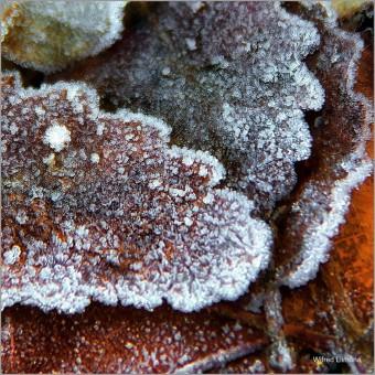 Hojas invernales F00800-2 · Autor: Wifred Llimona · Fotografías artísticas flora · La Llimona foto