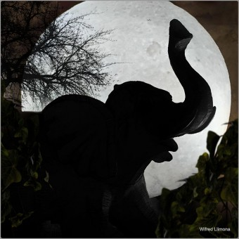 Elefante F00808 · Autor: Wifred Llimona · Fotografías artísticas fauna · La Llimona foto