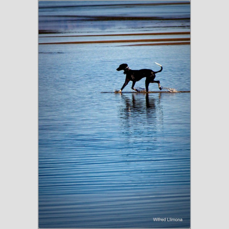 Perro F00836 Wifred Llimona · Fotografías artísticas fauna · La Llimona foto