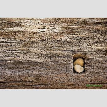 Tronco madera natural F00173-2 · Autor: Wifred Llimona · Fotografías artísticas detalles · La Llimona foto