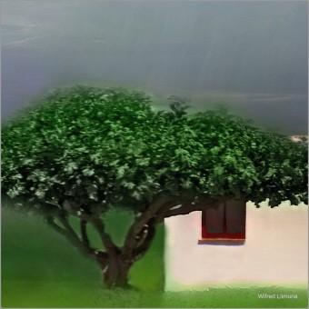 Fotografía casita rural F00856 Wifred Llimona · Fotografías artísticas paisajes naturales · La Llimona foto
