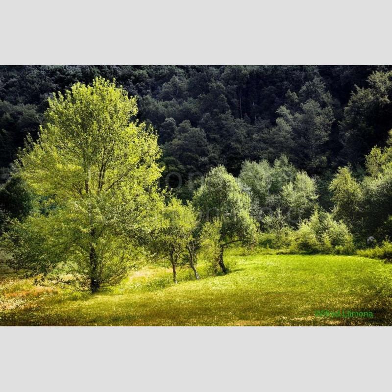 Arboles F00190-2 Wifred Llimona · Fotos artísticas paisajes naturales