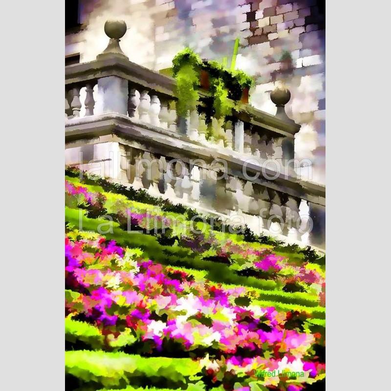 Escaleras florales F00253-2 · Autor: Wifred Llimona · Fotografías artísticas flora · La Llimona foto