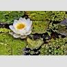 Flor con agua F00280 Wifred Llimona · Fotos artísticas flora