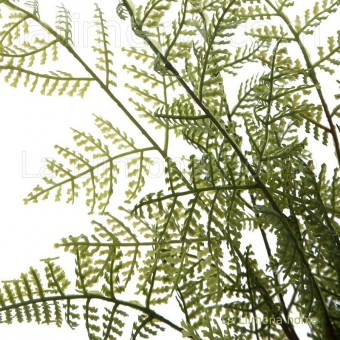 Planta boston fern artificial bush · Plantas artificiales 2