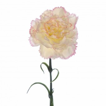 Flor clavel artificial rizado bicolor 55 · Flores artificiales · La Llimona home
