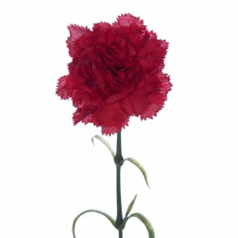 Flor clavel artificial rizado rojo 55 · Flores artificiales