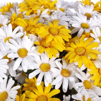 Flores y plantas artificiales - Rama margaritas artificiales amarillas  4
