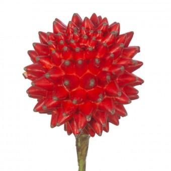Esfera crasa artificial roja 16 - Plantas artificiales - Crasas y cactus artificiales