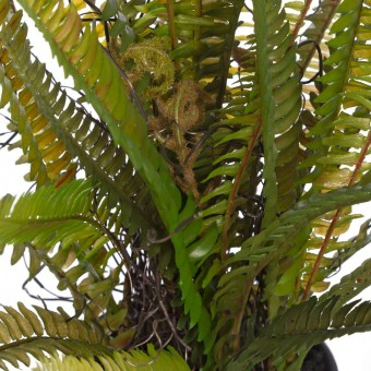 Helecho artificial 44 con maceta · Plantas artificiales · Planta artificial diversa 4 · La Llimona home