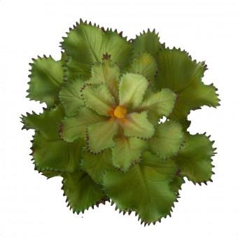 Echeveria Gibbiflora artificial verde 10 · Plantas artificiales · Crasas y cactus artificiales · La Llimona 2