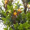Campanilla mini artificial amarilla 40 · Flores artificiales · La Llimona home