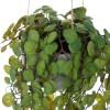 Peperomia prostrata colgante artificial con maceta 80 · Plantas colgantes artificiales · La Llimona home